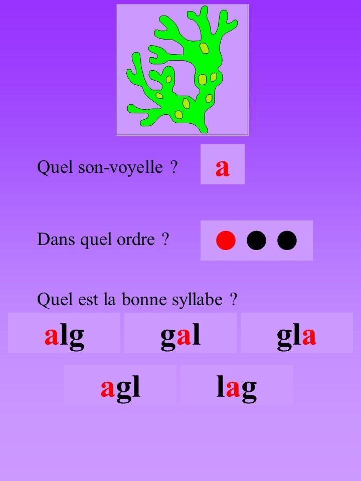 algue3 Quel son-voyelle ? a Dans quel ordre ?