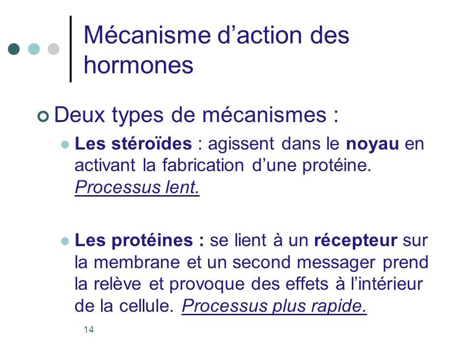 14 Mécanisme daction des hormones Deux types de mécanismes : Les stéroïdes : agissent dans le noyau en activant la fabrication dune protéine. Processu