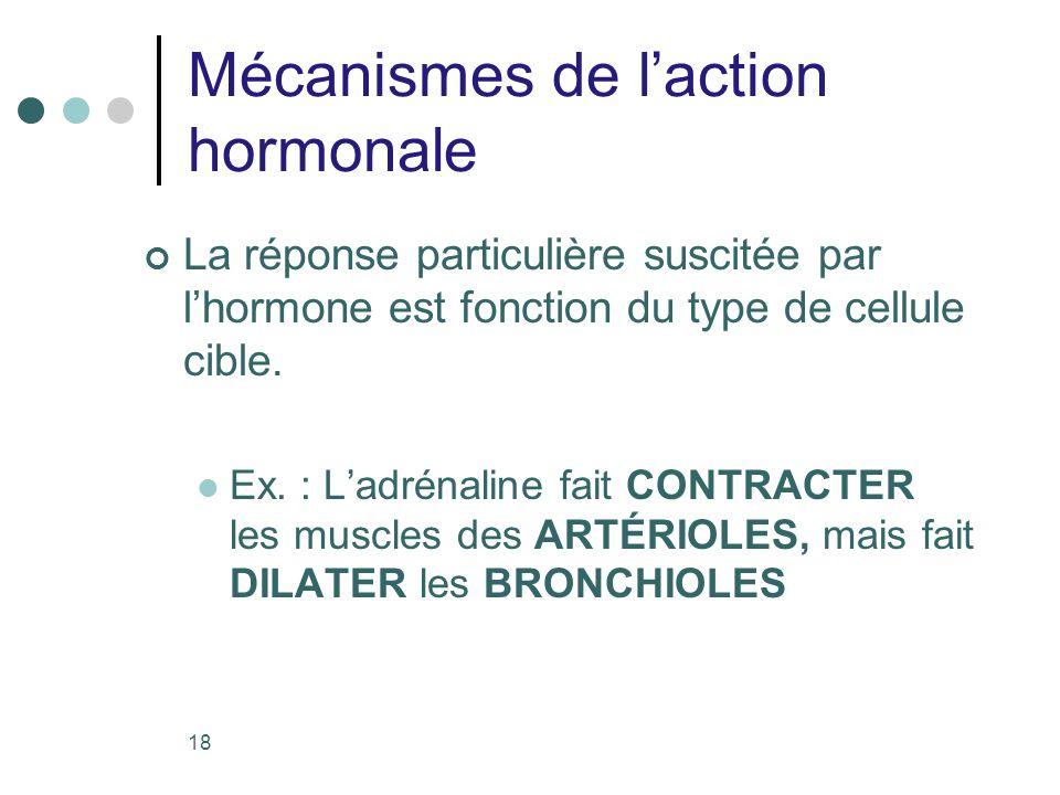 18 Mécanismes de laction hormonale La réponse particulière suscitée par lhormone est fonction du type de cellule cible. Ex. : Ladrénaline fait CONTRAC