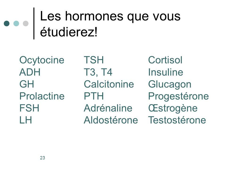 Les hormones que vous étudierez! 23 Ocytocine ADH GH Prolactine FSH LH TSH T3, T4 Calcitonine PTH Adrénaline Aldostérone Cortisol Insuline Glucagon Pr