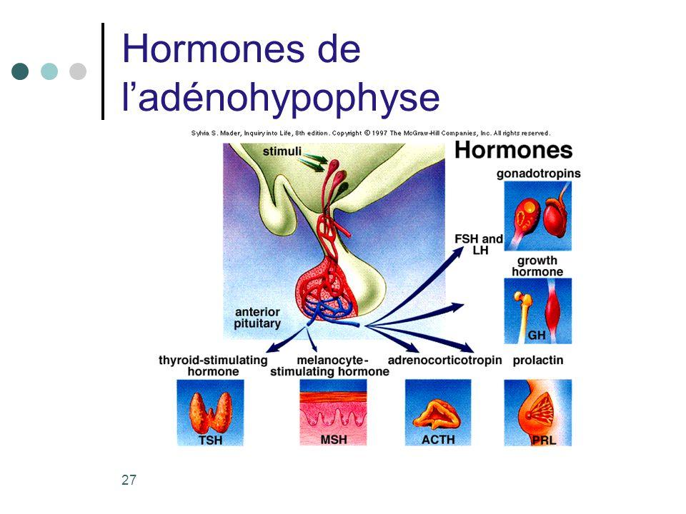 27 Hormones de ladénohypophyse