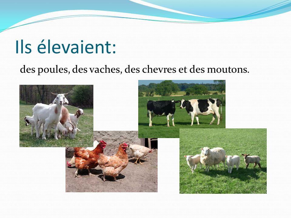Ils élevaient: des poules, des vaches, des chevres et des moutons.