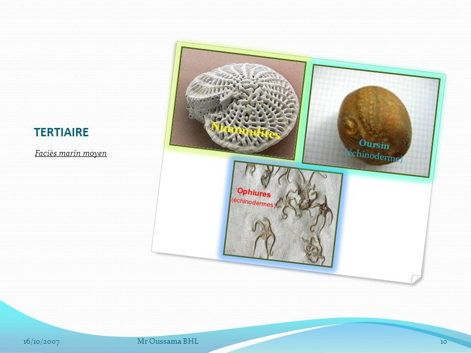 TERTIAIRE Faciès marin moyen Mr Oussama BHL1016/10/2007 Nummulites Ophiures (échinodermes) Oursin (échinoderme)