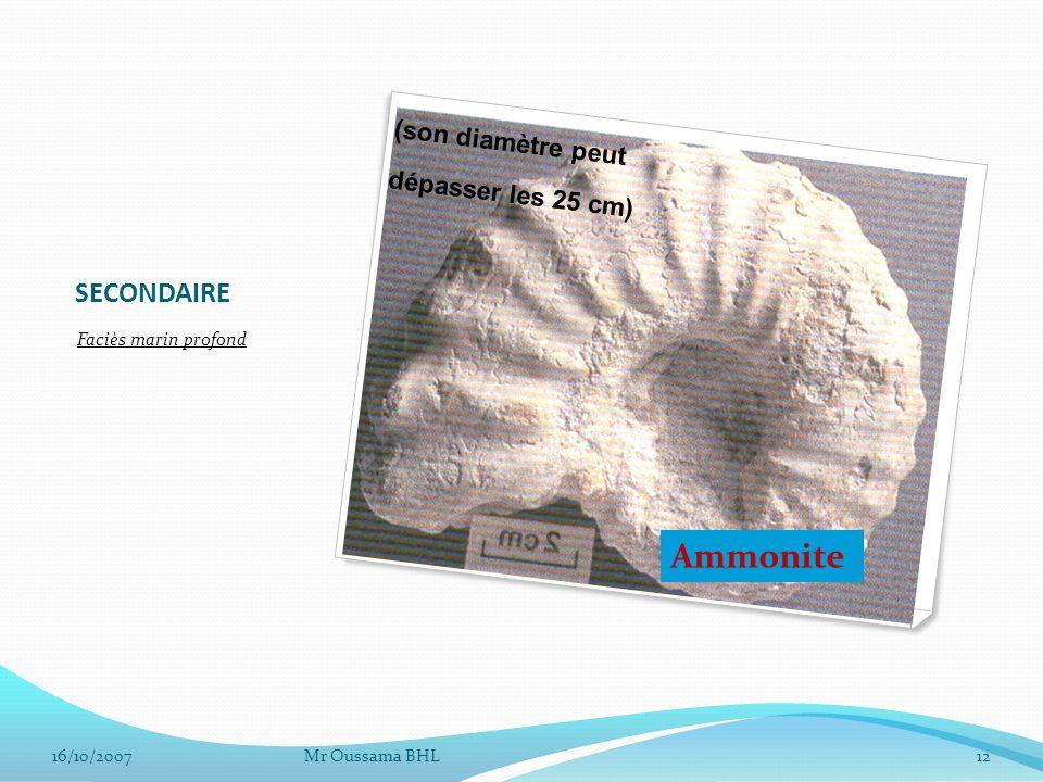 SECONDAIRE Faciès marin profond 16/10/2007Mr Oussama BHL12 Ammonite (son diamètre peut dépasser les 25 cm)