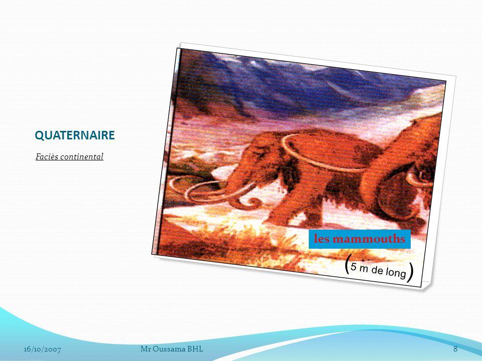 QUATERNAIRE Faciès continental Mr Oussama BHL816/10/2007 ( 5 m de long ) les mammouths