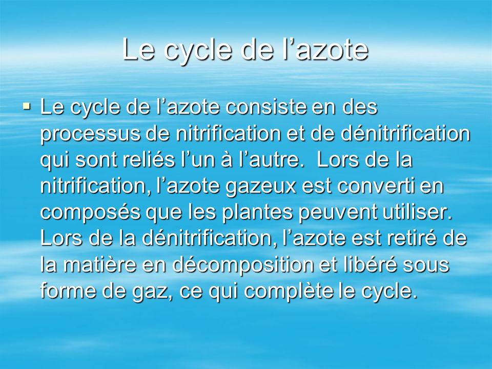 Le cycle de lazote Le cycle de lazote consiste en des processus de nitrification et de dénitrification qui sont reliés lun à lautre. Lors de la nitrif