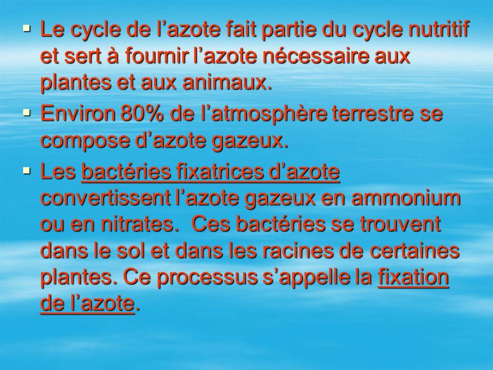 Le cycle de lazote fait partie du cycle nutritif et sert à fournir lazote nécessaire aux plantes et aux animaux. Le cycle de lazote fait partie du cyc