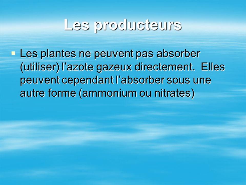 Les producteurs Les plantes ne peuvent pas absorber (utiliser) lazote gazeux directement. Elles peuvent cependant labsorber sous une autre forme (ammo