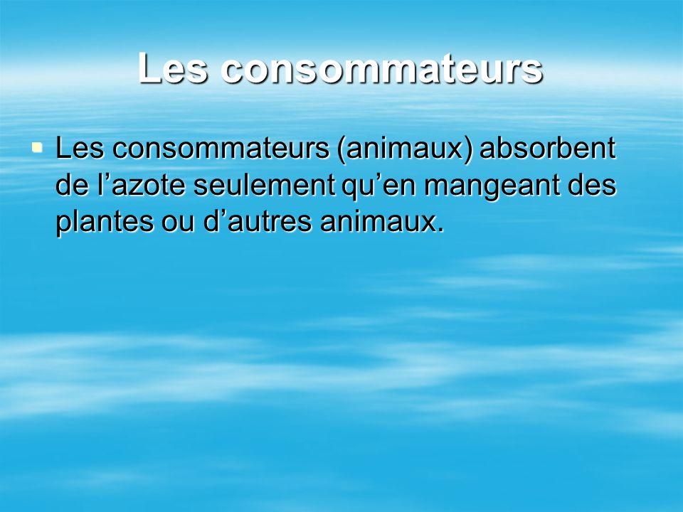 Les consommateurs Les consommateurs (animaux) absorbent de lazote seulement quen mangeant des plantes ou dautres animaux. Les consommateurs (animaux)