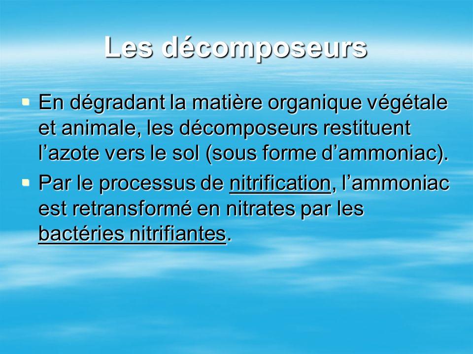 Les décomposeurs En dégradant la matière organique végétale et animale, les décomposeurs restituent lazote vers le sol (sous forme dammoniac). En dégr