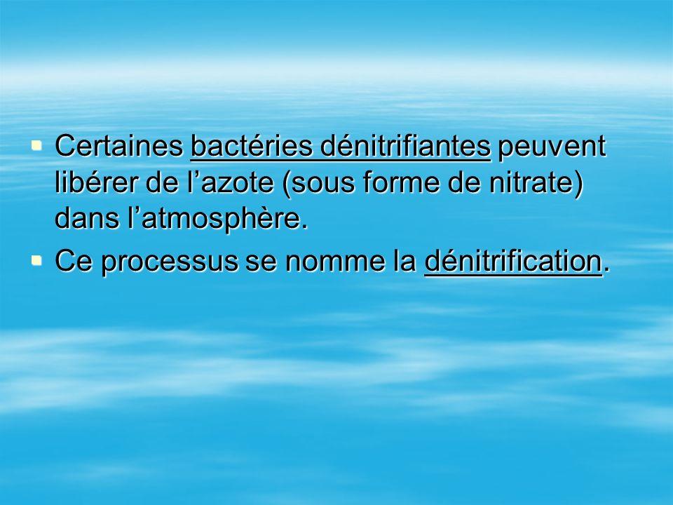 Certaines bactéries dénitrifiantes peuvent libérer de lazote (sous forme de nitrate) dans latmosphère. Certaines bactéries dénitrifiantes peuvent libé