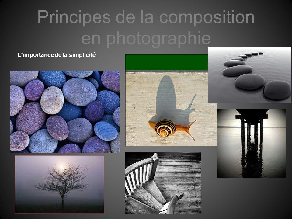 Principes de la composition en photographie L'importance de la simplicité