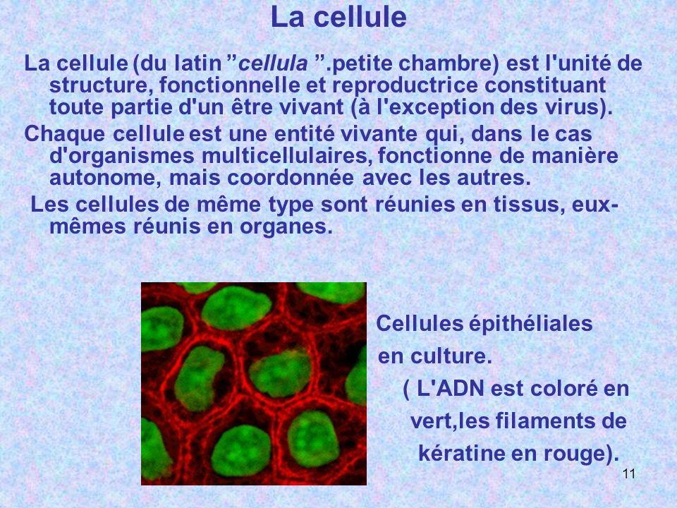 La cellule La cellule (du latin cellula.petite chambre) est l'unité de structure, fonctionnelle et reproductrice constituant toute partie d'un être vi