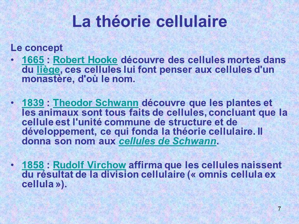La théorie cellulaire Le concept 1665 : Robert Hooke découvre des cellules mortes dans du liège, ces cellules lui font penser aux cellules d'un monast