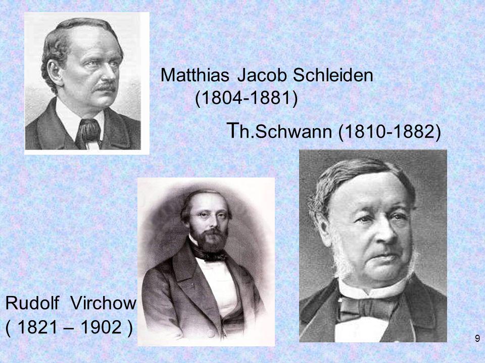 Matthias Jacob Schleiden (1804-1881) T h.Schwann (1810-1882) Rudolf Virchow ( 1821 – 1902 ) 9