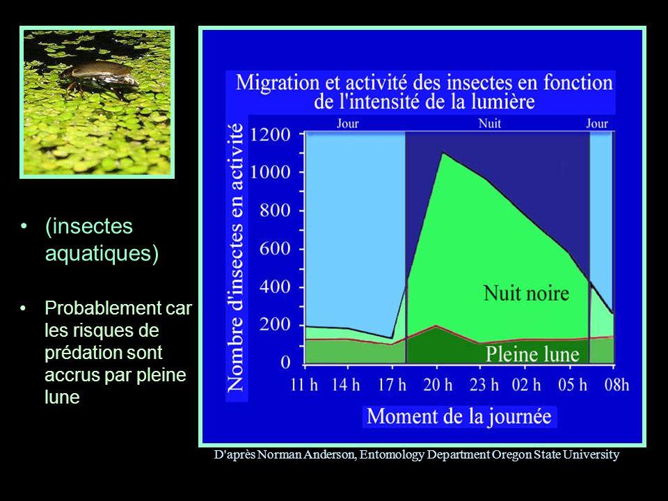 (insectes aquatiques) Probablement car les risques de prédation sont accrus par pleine lune D'après Norman Anderson, Entomology Department Oregon Stat