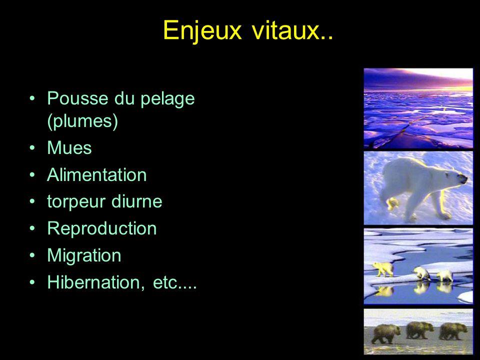 Enjeux vitaux.. Pousse du pelage (plumes) Mues Alimentation torpeur diurne Reproduction Migration Hibernation, etc....