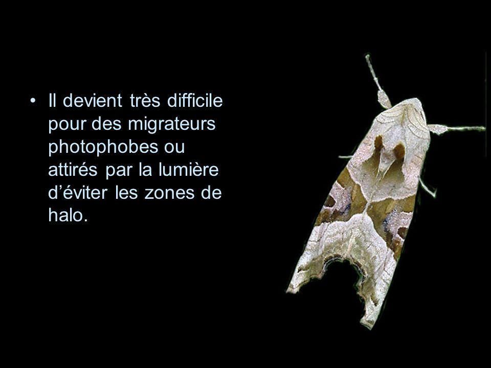 Il devient très difficile pour des migrateurs photophobes ou attirés par la lumière déviter les zones de halo.