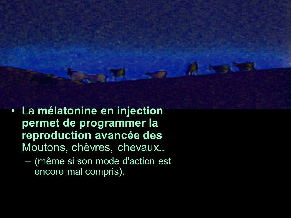 La mélatonine en injection permet de programmer la reproduction avancée des Moutons, chèvres, chevaux.. –(même si son mode d'action est encore mal com