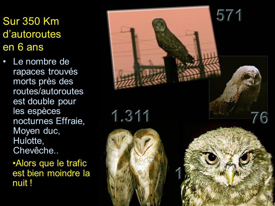 Le nombre de rapaces trouvés morts près des routes/autoroutes est double pour les espèces nocturnes Effraie, Moyen duc, Hulotte, Chevêche.. Sur 350 Km