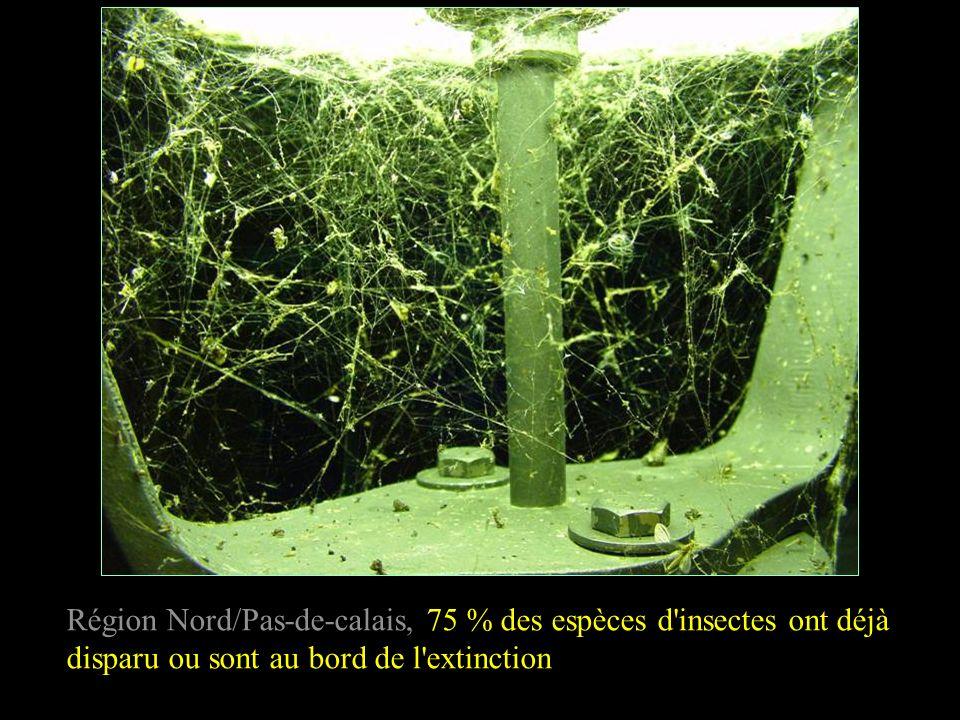 Région Nord/Pas-de-calais, 75 % des espèces d'insectes ont déjà disparu ou sont au bord de l'extinction