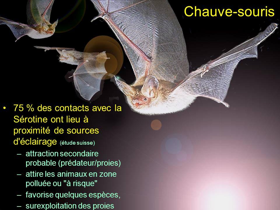 Chauve-souris 75 % des contacts avec la Sérotine ont lieu à proximité de sources d'éclairage (étude suisse) –attraction secondaire probable (prédateur