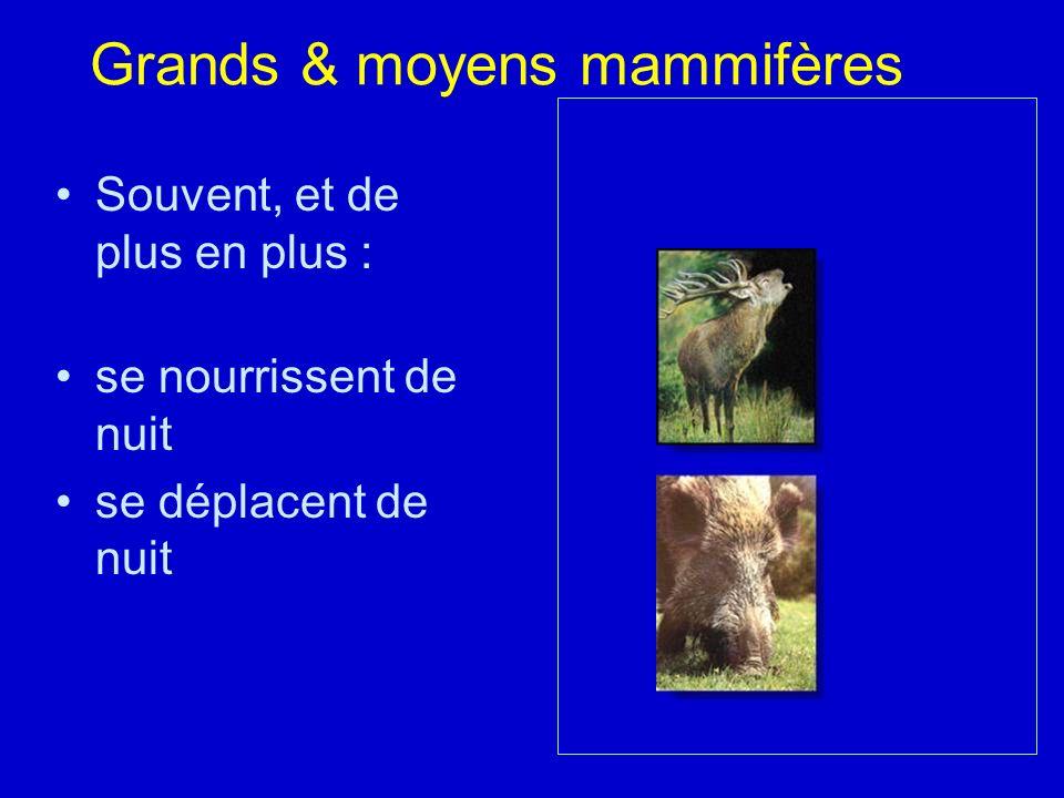 Grands & moyens mammifères Souvent, et de plus en plus : se nourrissent de nuit se déplacent de nuit