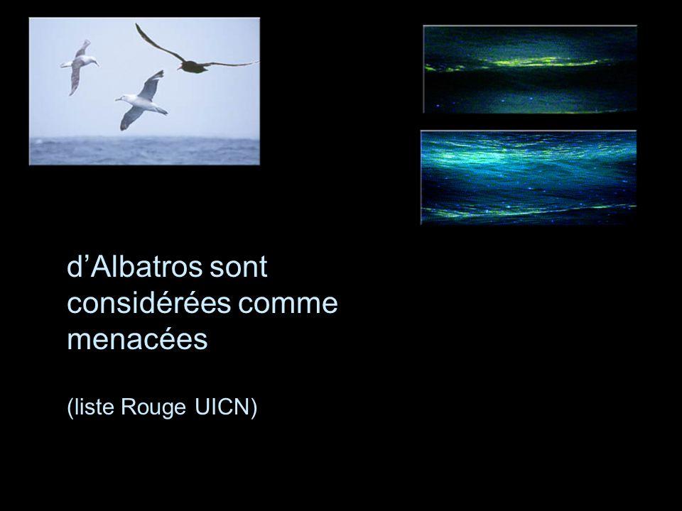 Les 21 espèces dAlbatros sont considérées comme menacées (liste Rouge UICN)