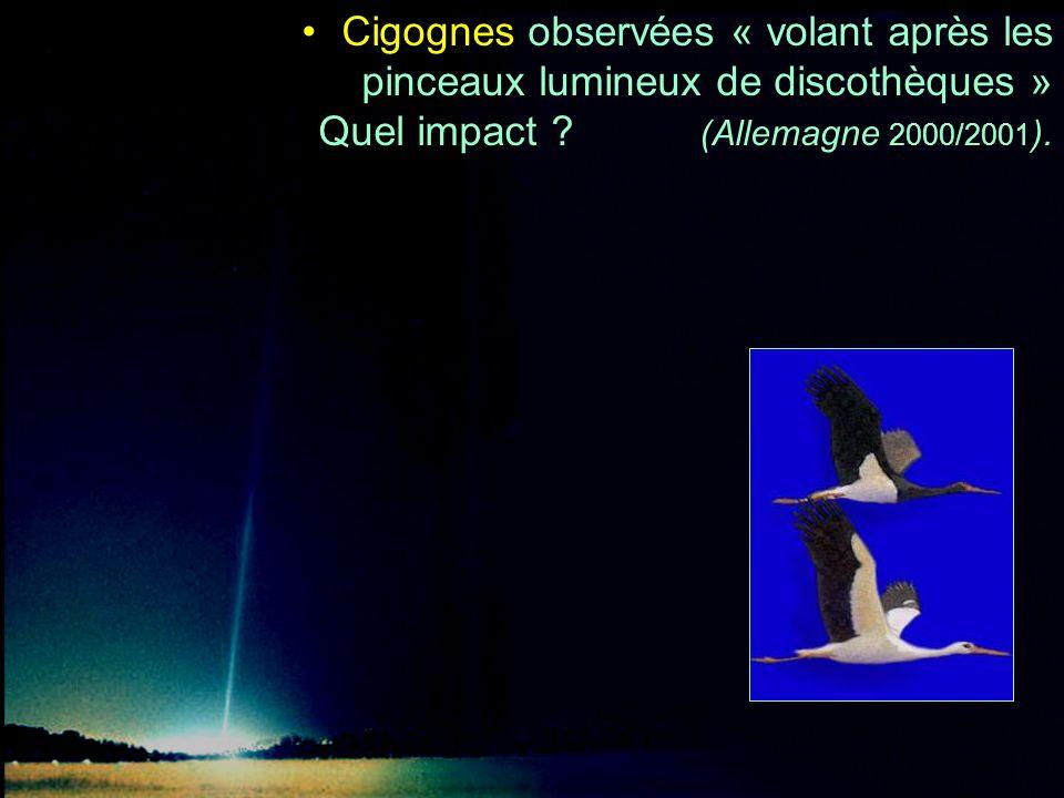Cigognes observées « volant après les pinceaux lumineux de discothèques » Quel impact ? (Allemagne 2000/2001 ).