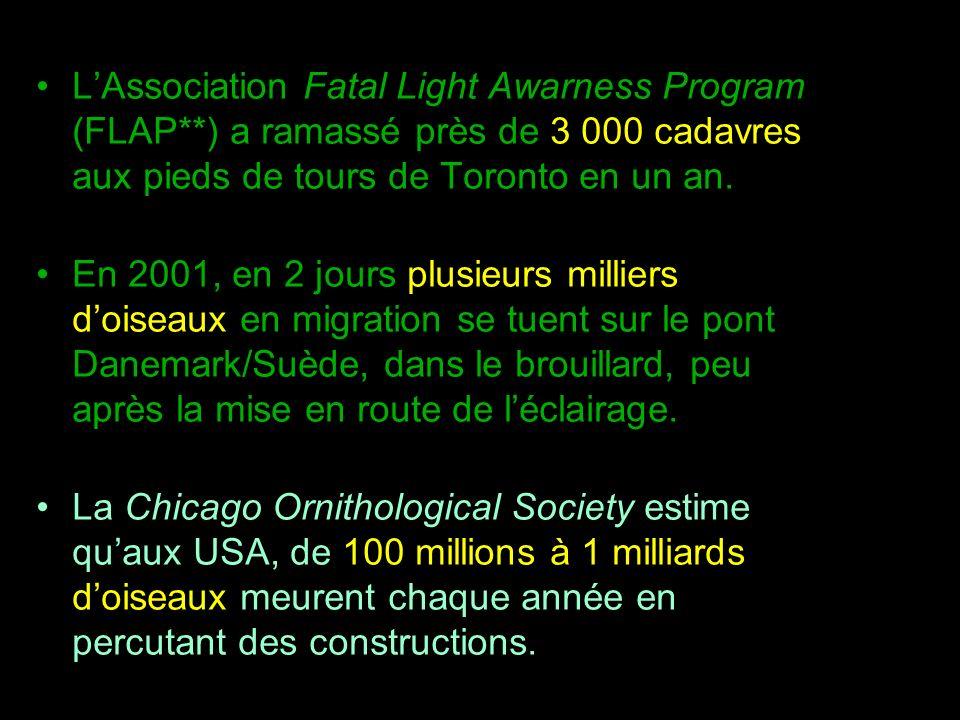 LAssociation Fatal Light Awarness Program (FLAP**) a ramassé près de 3 000 cadavres aux pieds de tours de Toronto en un an. En 2001, en 2 jours plusie