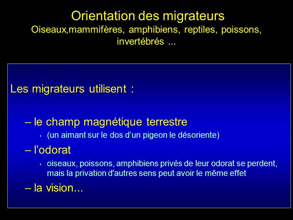 Les migrateurs utilisent : –le champ magnétique terrestre (un aimant sur le dos dun pigeon le désoriente) –lodorat oiseaux, poissons, amphibiens privé