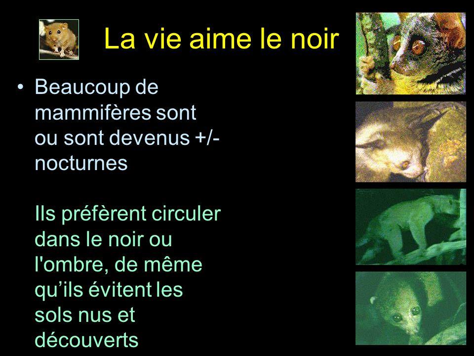 La vie aime le noir Beaucoup de mammifères sont ou sont devenus +/- nocturnes Ils préfèrent circuler dans le noir ou l'ombre, de même quils évitent le