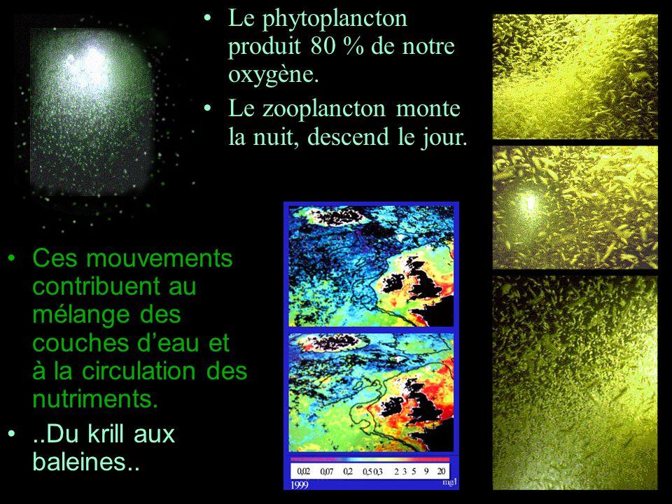 Ces mouvements contribuent au mélange des couches deau et à la circulation des nutriments...Du krill aux baleines.. Le phytoplancton produit 80 % de n