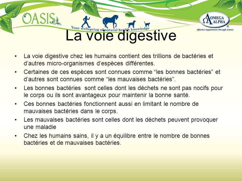 La voie digestive La voie digestive chez les humains contient des trillions de bactéries et dautres micro-organismes despèces différentes. Certaines d