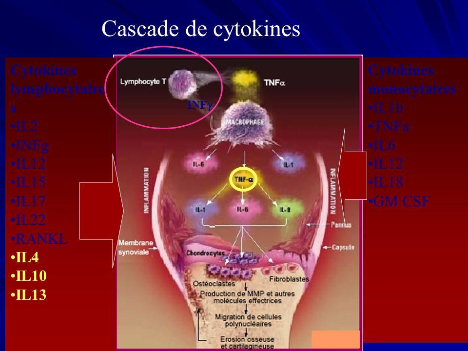 Cytokines lymphocytaire s IL2 INFg IL12 IL15 IL17 IL22 RANKL IL4 IL10 IL13 INF Cascade de cytokines Cytokines monocytaires IL1b TNFa IL6 IL12 IL18 GM