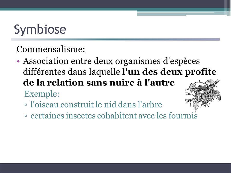 Symbiose Commensalisme: Association entre deux organismes d'espèces différentes dans laquelle l'un des deux profite de la relation sans nuire à l'autr