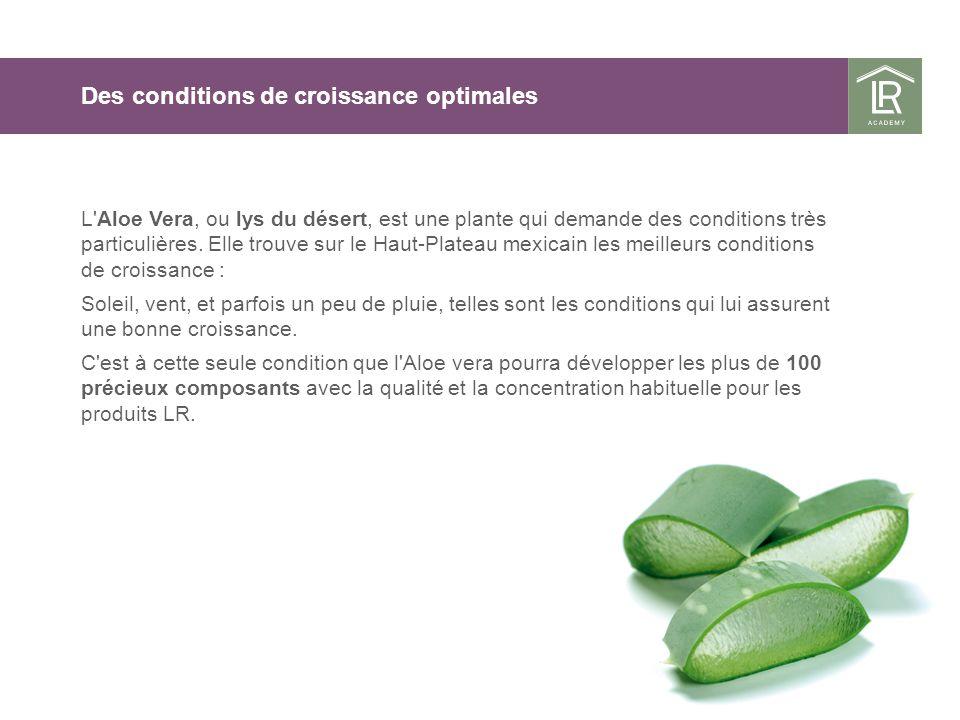 Des conditions de croissance optimales L'Aloe Vera, ou lys du désert, est une plante qui demande des conditions très particulières. Elle trouve sur le