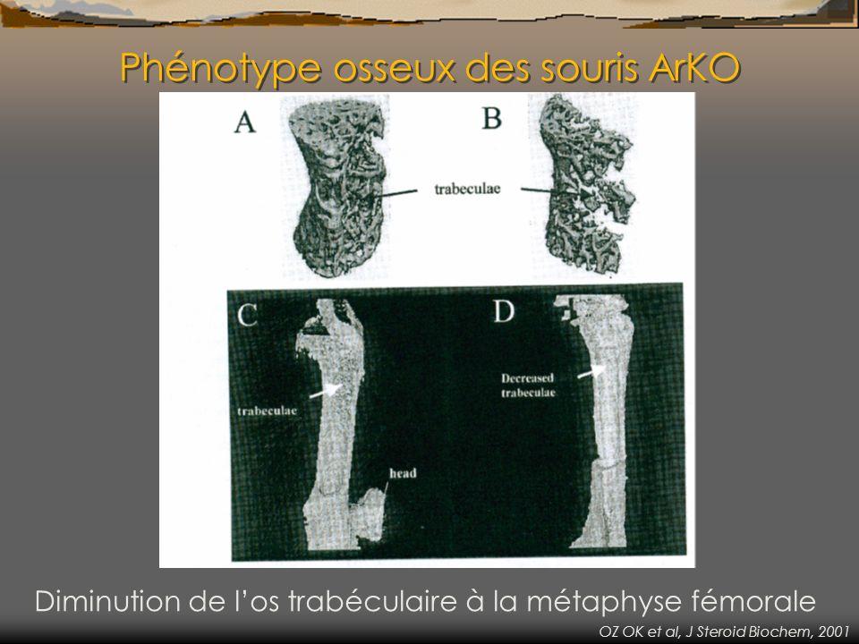 Modèle de surexpression de laromatase P450 cytochrome humaine (Age of 40 days) Volume trabéculaire osseux significativement augmenté au fémur et au tibia Peng Z et al, J Bone Miner Res, 2004