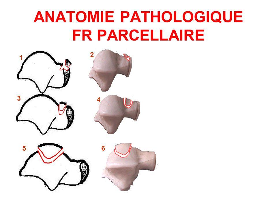 ANATOMIE PATHOLOGIQUE FR PARCELLAIRE 1 2 3 4 56