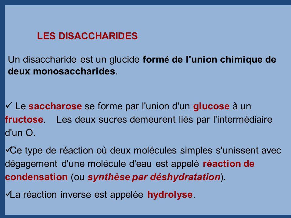 Le saccharose se forme par l'union d'un glucose à un fructose. Les deux sucres demeurent liés par l'intermédiaire d'un O. Ce type de réaction où deux