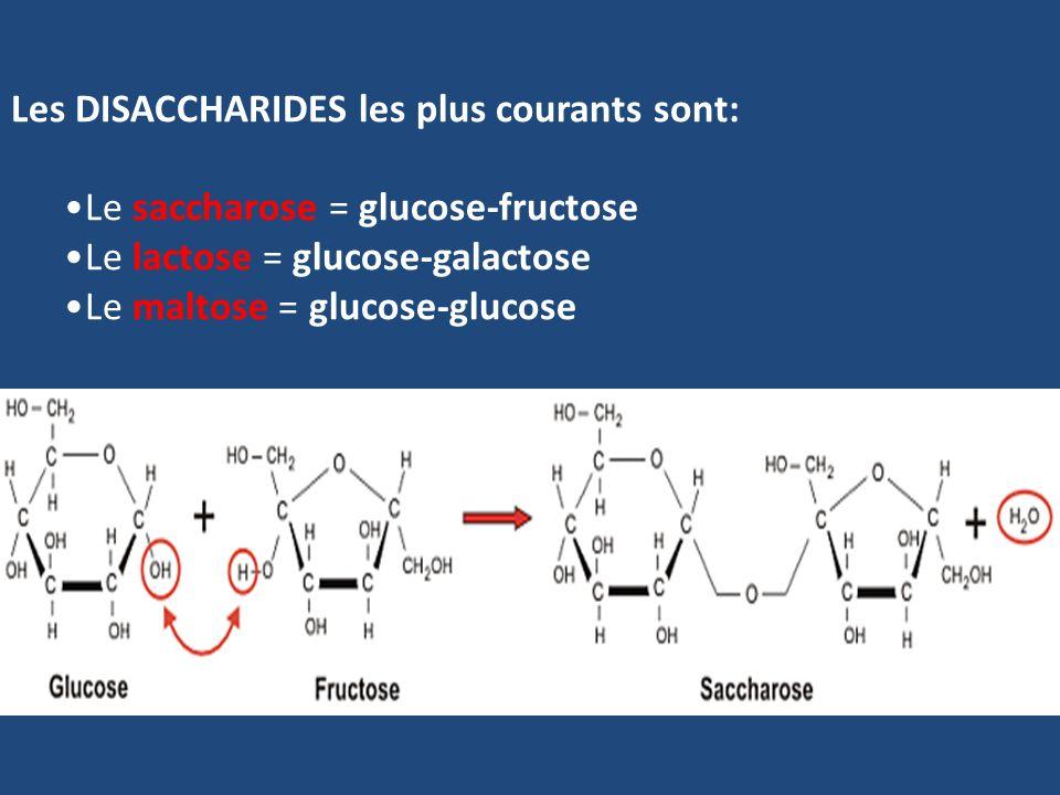 Les DISACCHARIDES les plus courants sont: Le saccharose = glucose-fructose Le lactose = glucose-galactose Le maltose = glucose-glucose