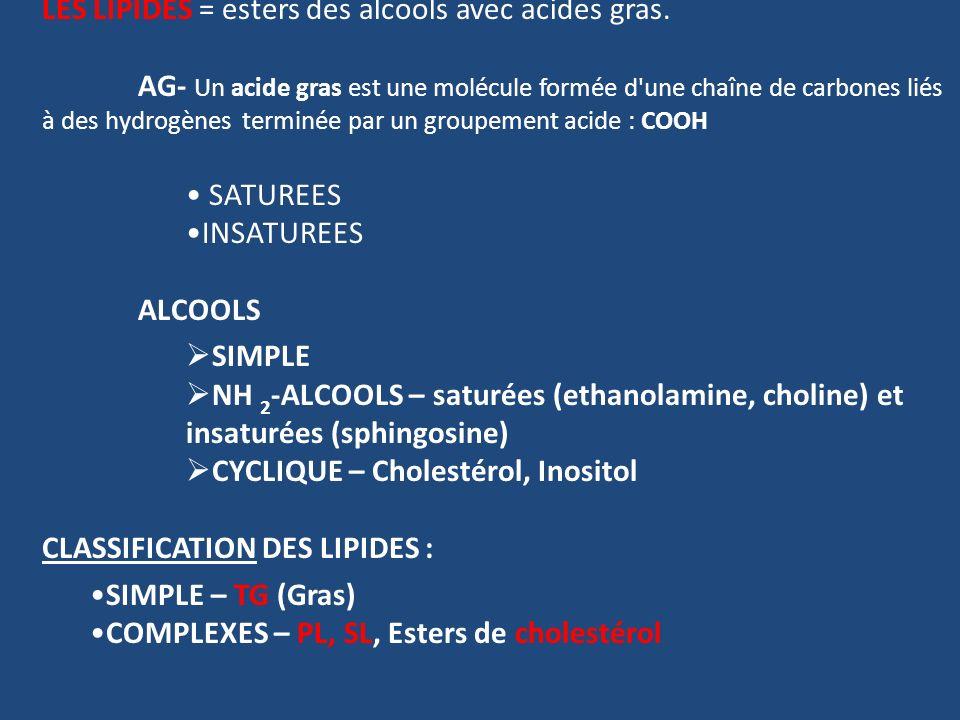 LES LIPIDES = esters des alcools avec acides gras. AG- Un acide gras est une molécule formée d'une chaîne de carbones liés à des hydrogènes terminée p