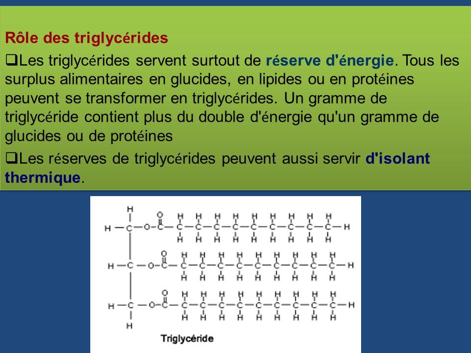 Rôle des triglyc é rides Les triglyc é rides servent surtout de r é serve d' é nergie. Tous les surplus alimentaires en glucides, en lipides ou en pro