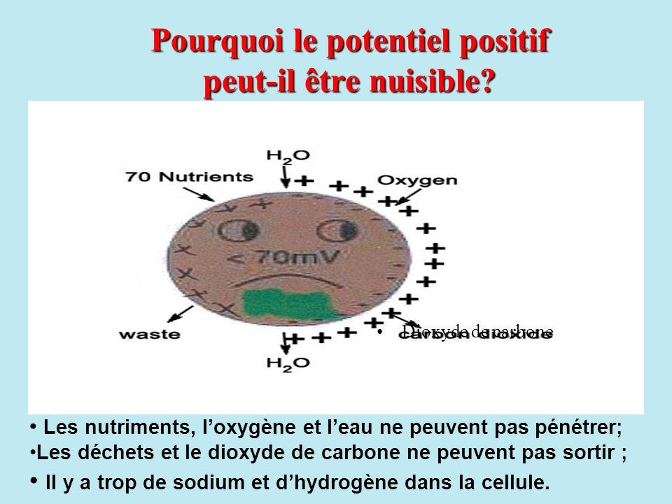 Les nutriments, loxygène et leau ne peuvent pas pénétrer; Les déchets et le dioxyde de carbone ne peuvent pas sortir ; Il y a trop de sodium et dhydrogène dans la cellule.