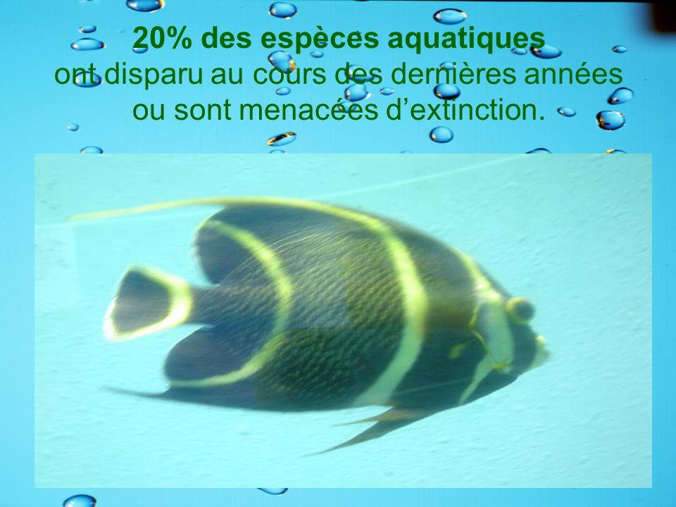 20% des espèces aquatiques ont disparu au cours des dernières années ou sont menacées dextinction.