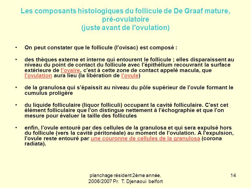 planchage résident 2ème année, 2006/2007 Pr. T. Djenaoui belfort 14 Les composants histologiques du follicule de De Graaf mature, pré-ovulatoire (just