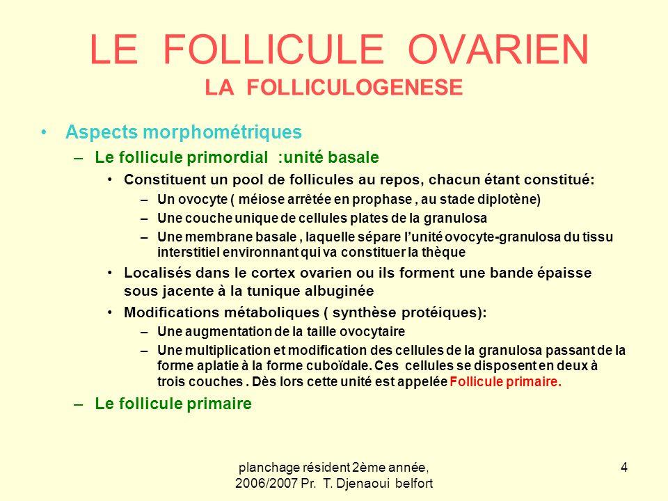 planchage résident 2ème année, 2006/2007 Pr. T. Djenaoui belfort 4 LE FOLLICULE OVARIEN LA FOLLICULOGENESE Aspects morphométriques –Le follicule primo