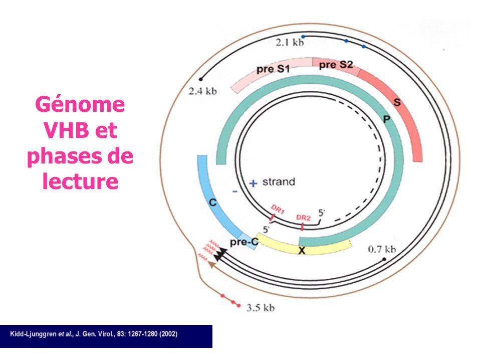 F.AJANA – Avancées Vaccinales 2005 HBV : particule de Dane Ag HBs: Proteines S, Pré S1, PréS2 Ag HBs: Proteines S, Pré S1, PréS2 nucleocapside : Ag HB
