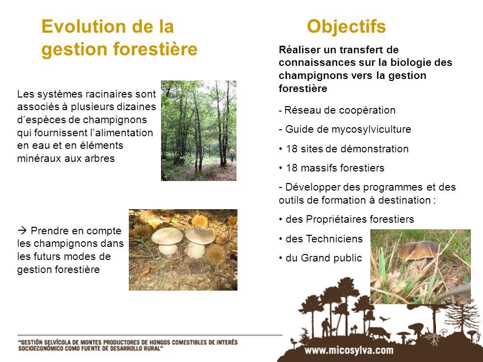 Les systèmes racinaires sont associés à plusieurs dizaines despèces de champignons qui fournissent lalimentation en eau et en éléments minéraux aux ar