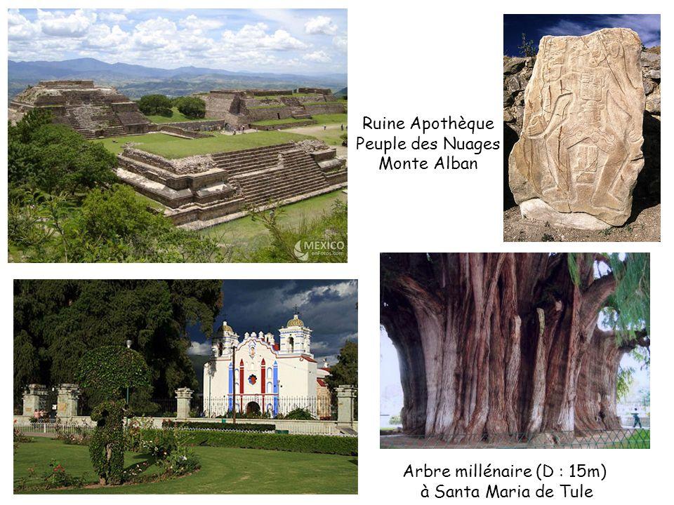 Ruine Apothèque Peuple des Nuages Monte Alban Arbre millénaire (D : 15m) à Santa Maria de Tule